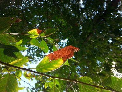 mopana-autumn-leaves-sad-dance-01