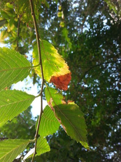 mopana-autumn-leaves-sad-dance-02