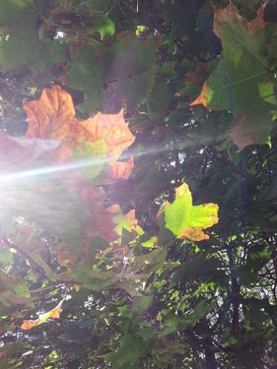 mopana-autumn-leaves-sad-dance-03