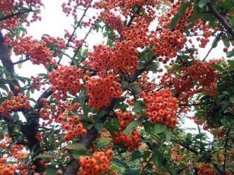 mopana-coloured-fall-03