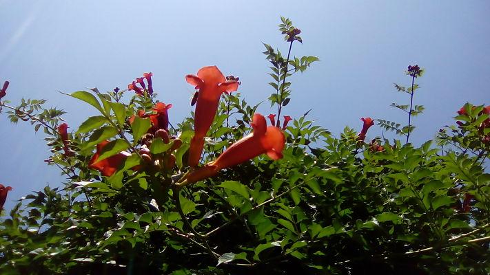 mopana-summer-beauty-08