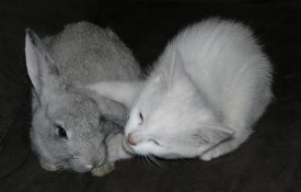 Cats, bunnies and rabbits.