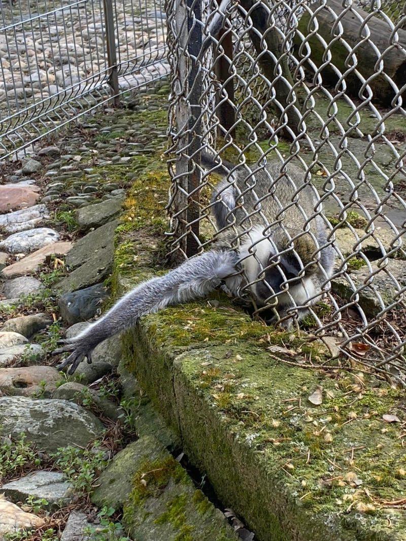 зоопарк хисарлъка