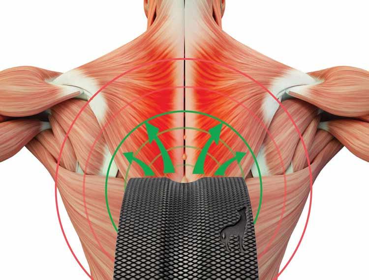 Plexus Wheel The Simplest Back Pain Relief 1