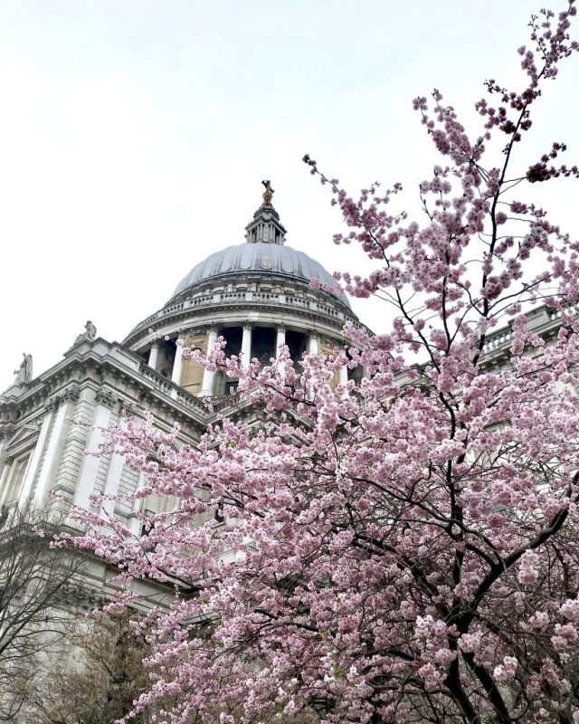 st pauls cathedral spring london
