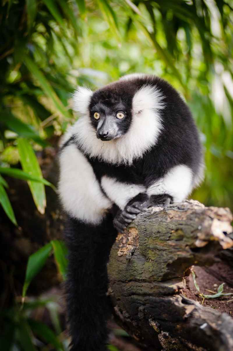 white and black long coated animal