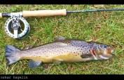 Sculpin_trout