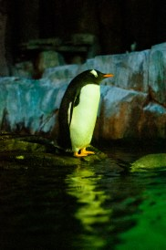 Just standing there looking fantastic. You rock it Penguin!