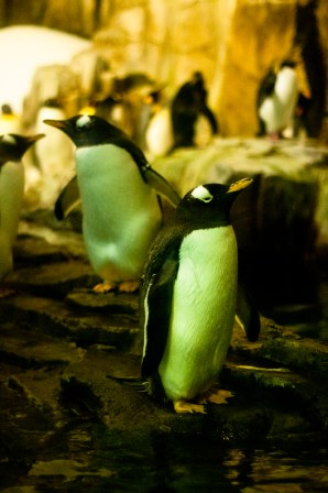 Penguins stand proud and happy :D