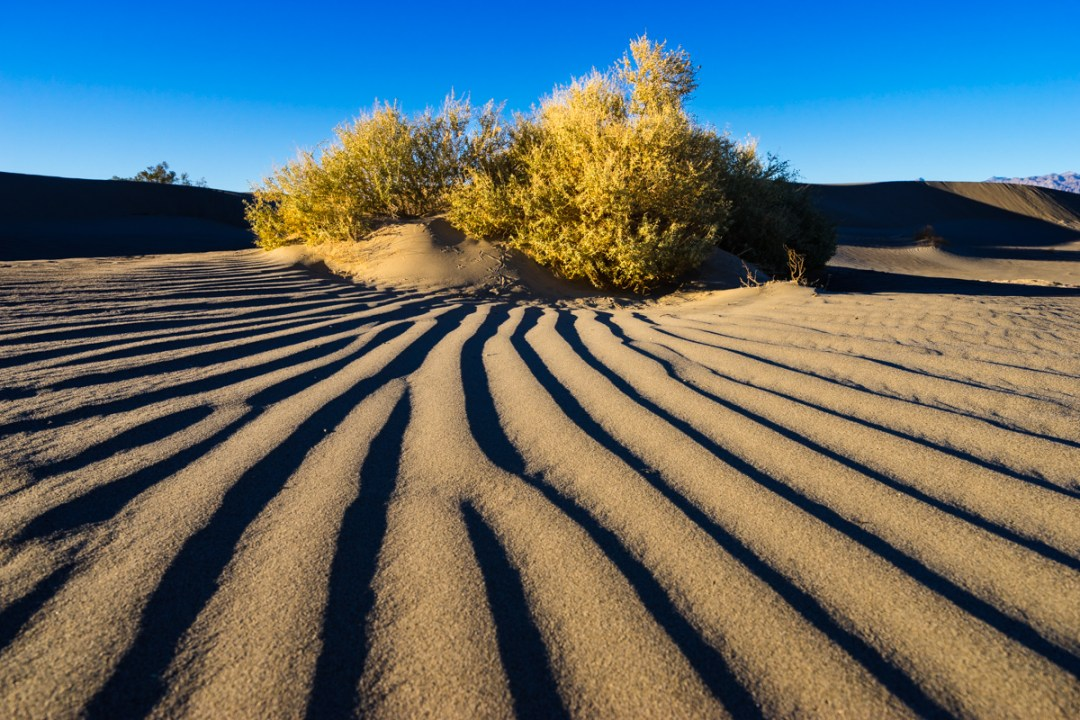 Ripples in the sands of the Mesquite Dunes