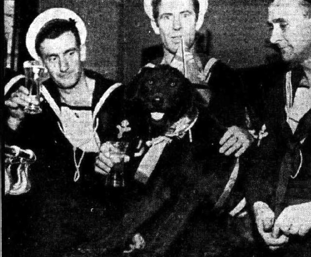 THIS DOG was befriended yesterday by sailors, who decked him in gay ribbons, stuck a flag in his collar and lined him up with them at a Perth hotel bar (where this picture was taken). This morning he was mentioned in Perth Police Court proceedings. A reference to him as a mongrel was said to have started a brawl in which a plate glass window was broken.