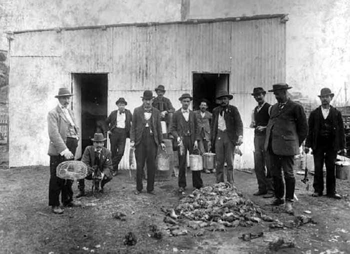 rat catchers sydney 1901