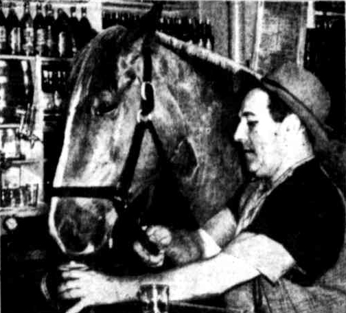 horse drinking beer