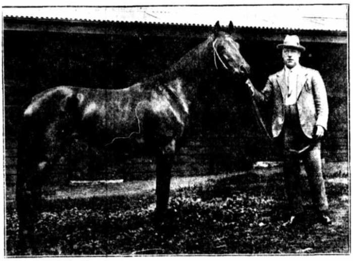 Woolpack Hotel Parramatta T Lockett race horse