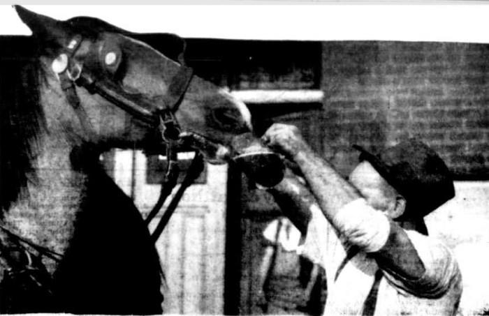 horse beer