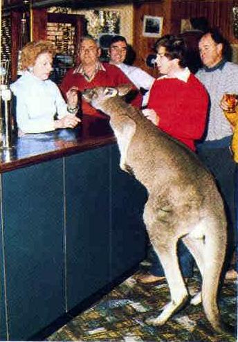 kangaroo pub 2