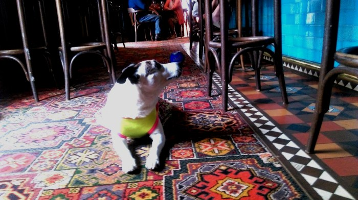 dog bar shakespeare hotel surry hills 2018