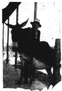 brandy mule 1935