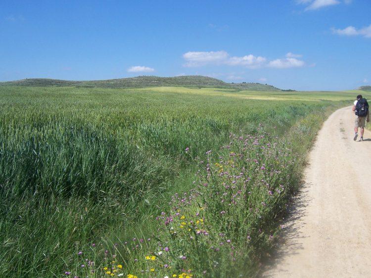 A view of El Camino