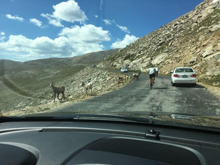 mount evans road