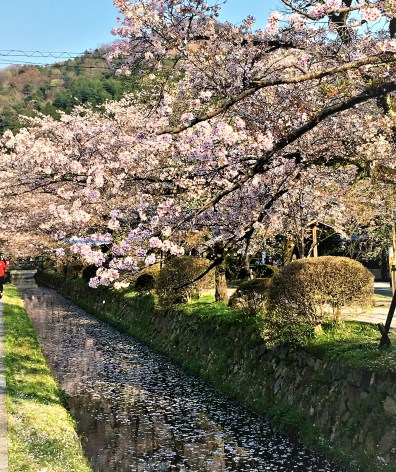 The canals along Philosopher's Path, Kyoto