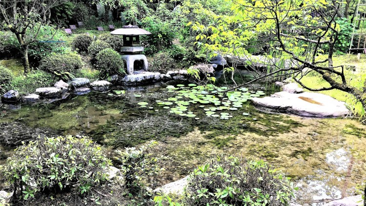A walk through this beautiful garden in Heian Shrine, Kyoto was simply serene. It leads you to discover little gems like this in lotus ponds and the peacefulness here is majestic.