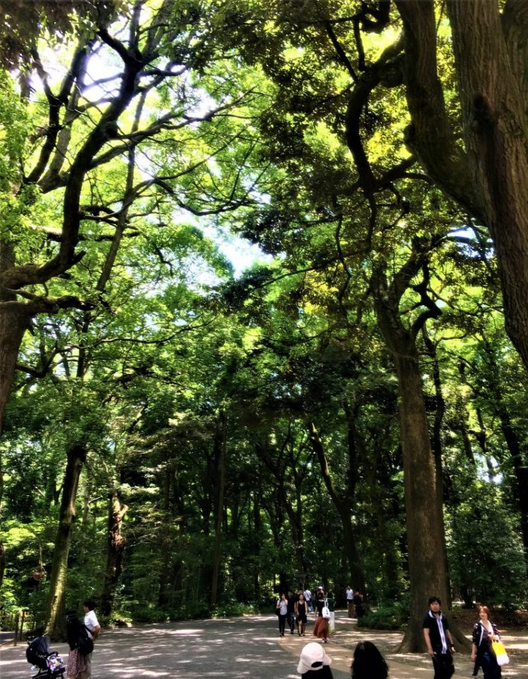 The tranquillity of the forest that surrounds the Meiji Shrine in Tokyo.
