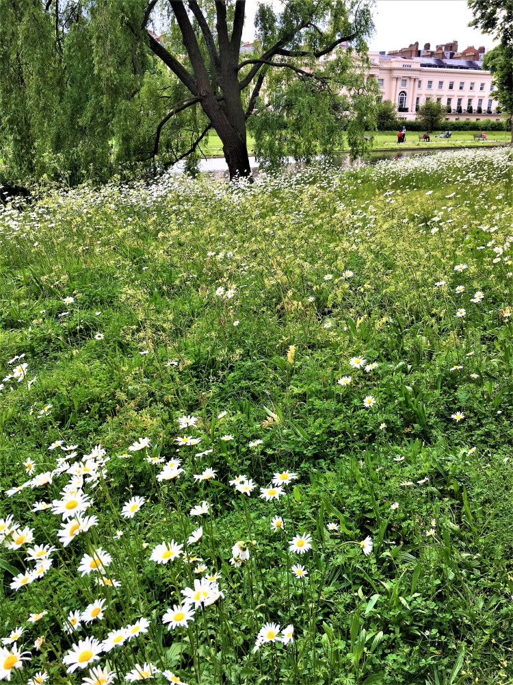 Daisies - Spring here, there and everywhere