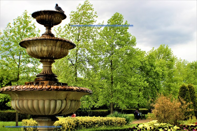 Regent's Park: Tiered fountains, evergreen hedges, spring bulbs and summer bedding at Avenue Gardens.