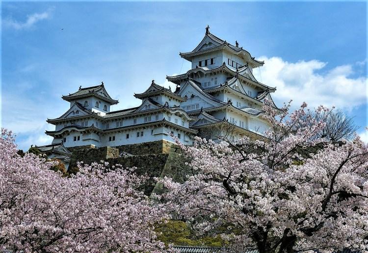 Himeji Castle during hanami