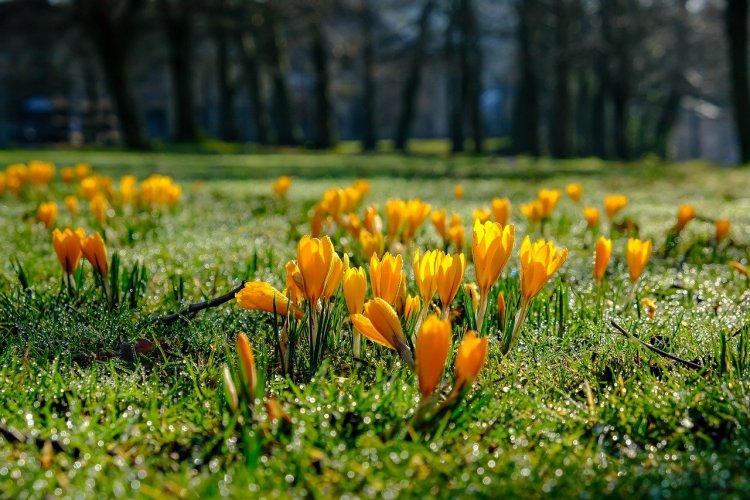 Spring flowers | Scotland at a glance