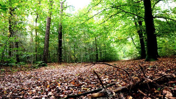 Forest walk Amsterdamse Bos