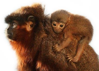 monkeymasked