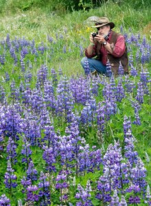 T.Ganner Photography, wildflowers, lupine