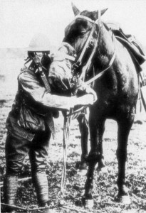 A horse prepared for a gas attack.