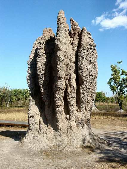 """A termite ""cathedral"" mound produced by a termite colony is a classic example of emergence in nature."" - Wikipedia (""Emergence"")"