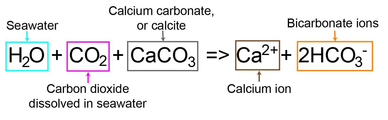 Ocean Chemistry & Acidification – Time Scavengers