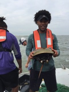 scientist hiking a horseshoe crab at sea