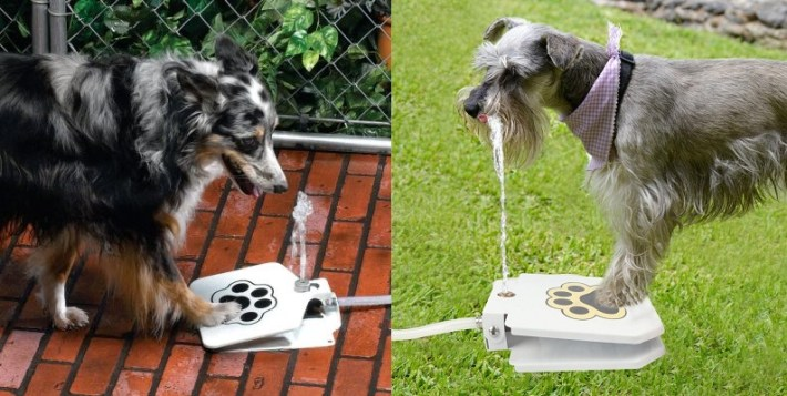 Cool gadgets for dogs