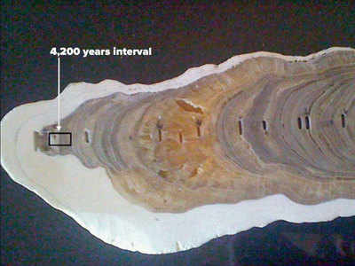 Image result for A layer (marked in pic) in this stalagmite from Meghalaya he