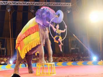 Use of Animals in Circuses Should Be Banned? - Let's Save Them