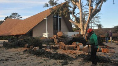A 100-foot eucalyptus tree fell near a church in Point Loma. The church was spared damage. Photo by Chris Stone