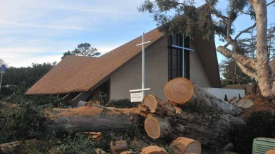 A 100-foot eucalyptus tree fell near a church in Point Loma. Westminster Presbyterian was spared damage. Photo by Chris Stone