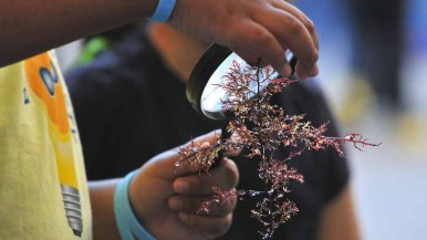 A young visitor examined algae through a magnifying glass. Photo by Chris Stone