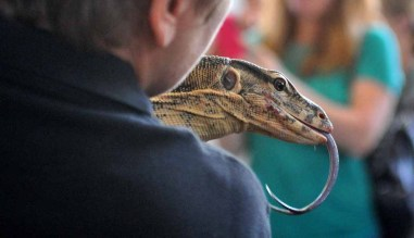 A Salvator water monitor at the EcoVivarium attracted attention. Photo by Chris Stone