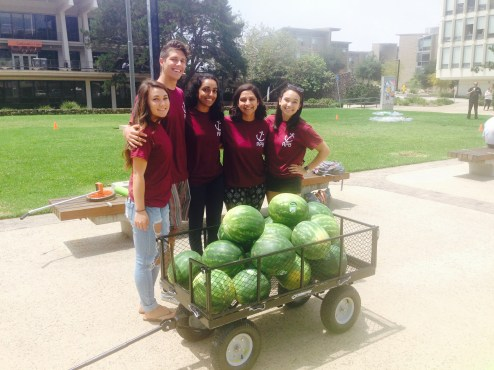 The event committee for Revelle college gets ready to slice up these watermelons for some hungry students. Photo Credit: Cassia Pollock