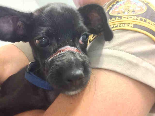 Rescued Santee Puppy