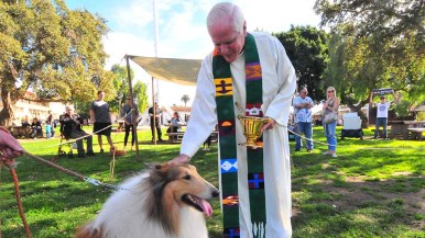 The Rev. Michael Sinor blesses Harvey a six-year-old Collie from Lakeside.