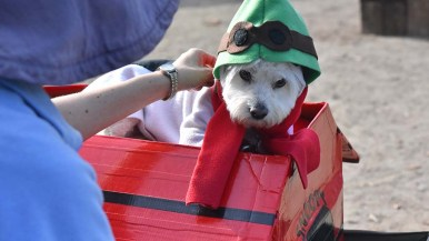 Sammie, a maltipoo, dressed as Snoopy won the most creative prize in the contest.