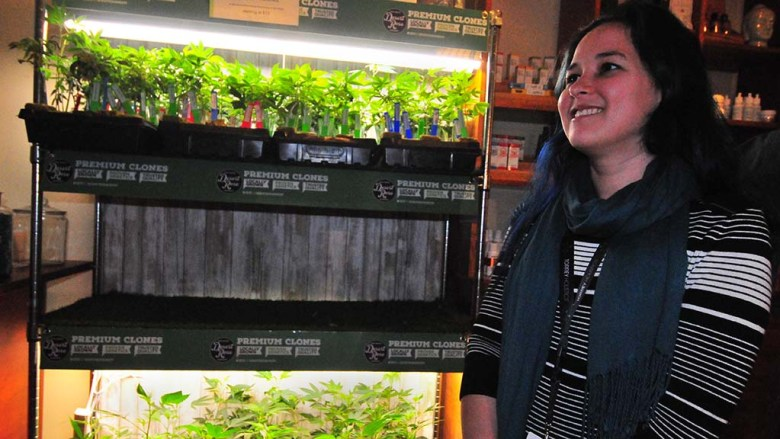 Christine Bordenave, general manager of Torrey Holistics, speaks about the marijuana plants for sale.